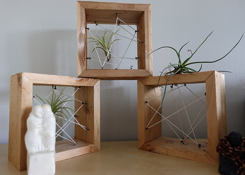 Airplants Suspended in String