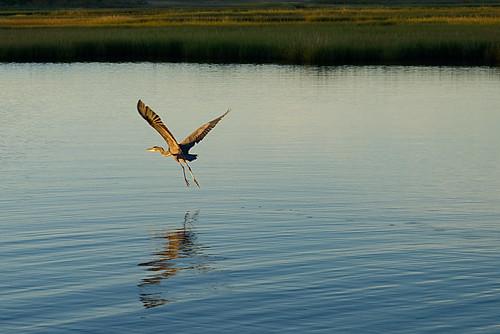 assawomanbay oceancity marsh sunrise