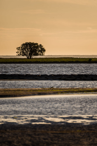 dawn grass layers outdoors river sea sky sunset tree water reflections nature