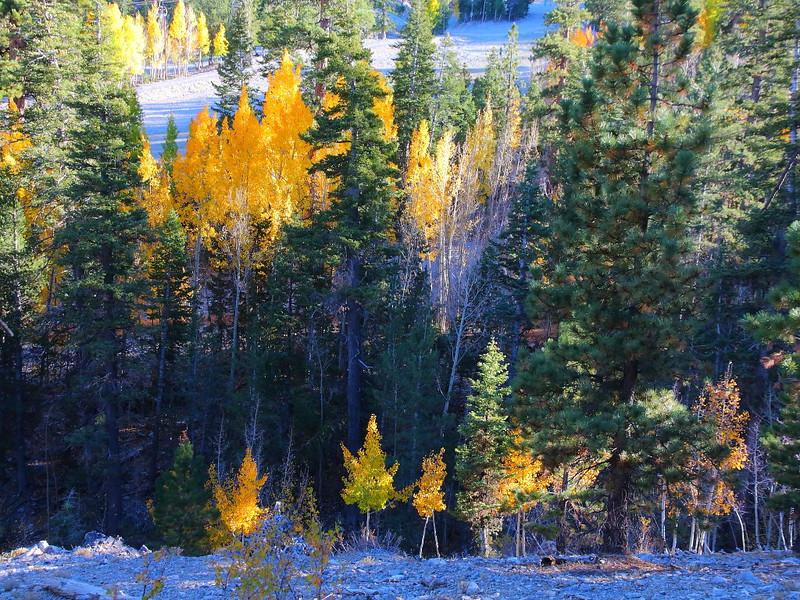 IMG_1456 Bristlecone Pine Trail