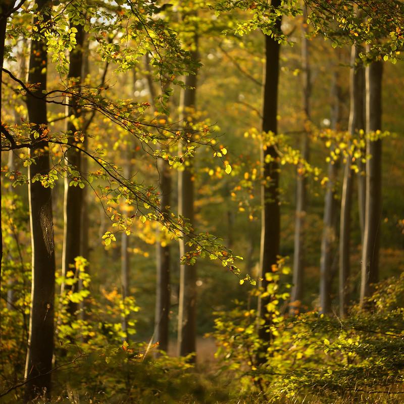 Autumn Sunset, Friston Forest