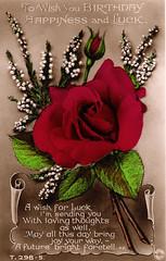 Birthday Greetings Card - Red Rose