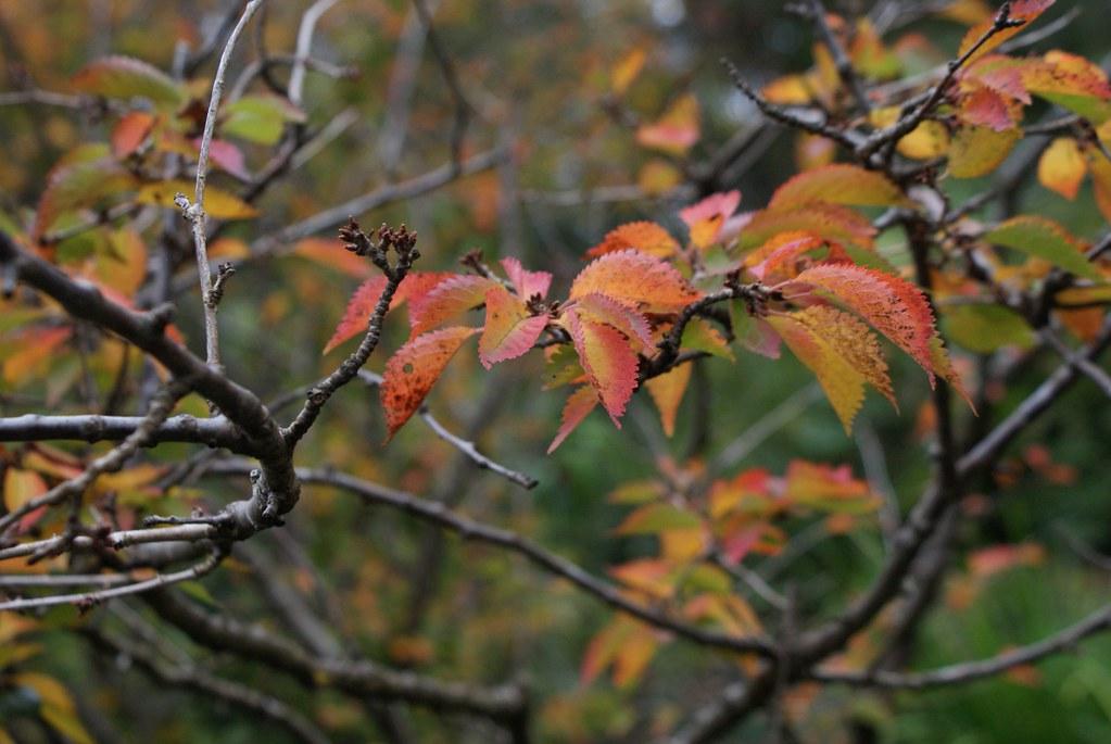 > Magie de l'automne au jardin botanique d'Edimbourg.