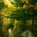Little Pond Boardwalk Trail