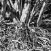 tree roots por apmckinlay