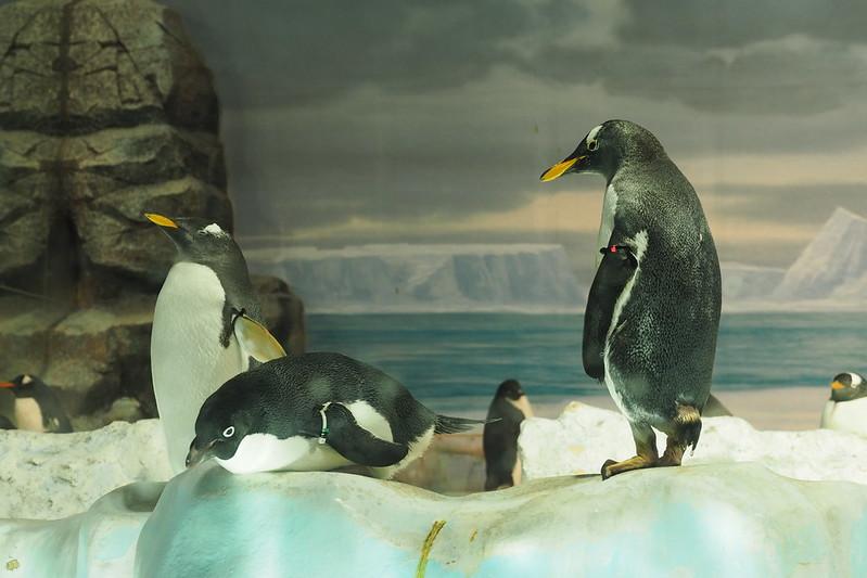 名古屋港水族館ペンギン