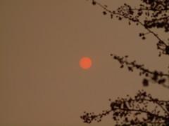 Pink-sun