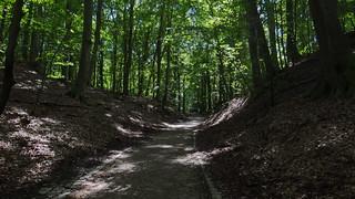 Wald einsam Rügen