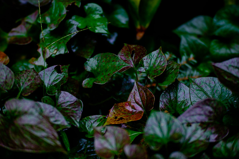 Autumn long rainy garden