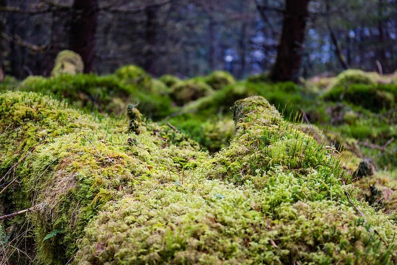 Inversnaid - Loch Lomond - Ecosse