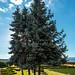 Árvore no Castelo de Chaves
