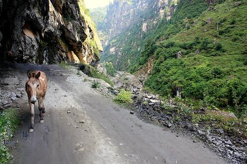 J9 : 29 septembre 2017 : 3ème jour du trek : de Tal (1700 m) à Chame (2710 m)