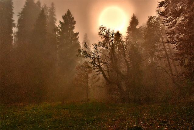 In the fog, Swiss autumn time, Combe Grède. Canton of Berne . Switzerland. No. 367.