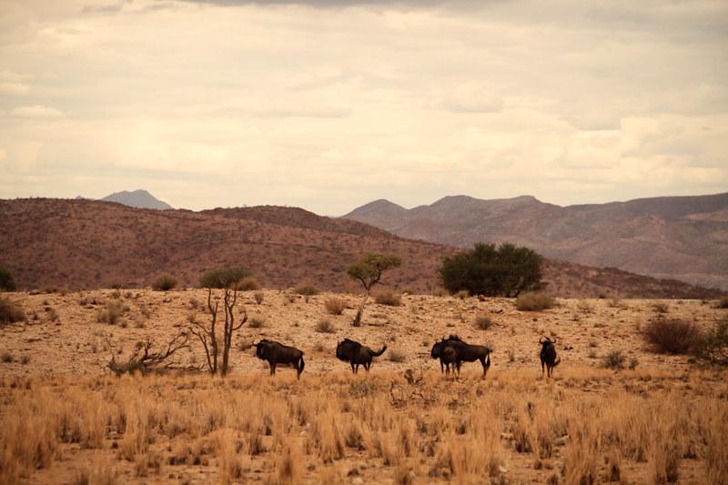 Namibia-Urlaub-Safari-Tour