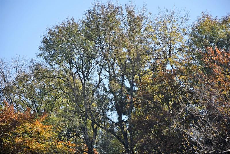 Autumn 18.20 (2)