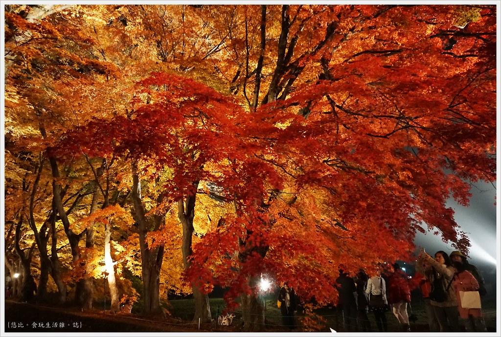 紅葉迴廊-紅葉祭-夜楓-44