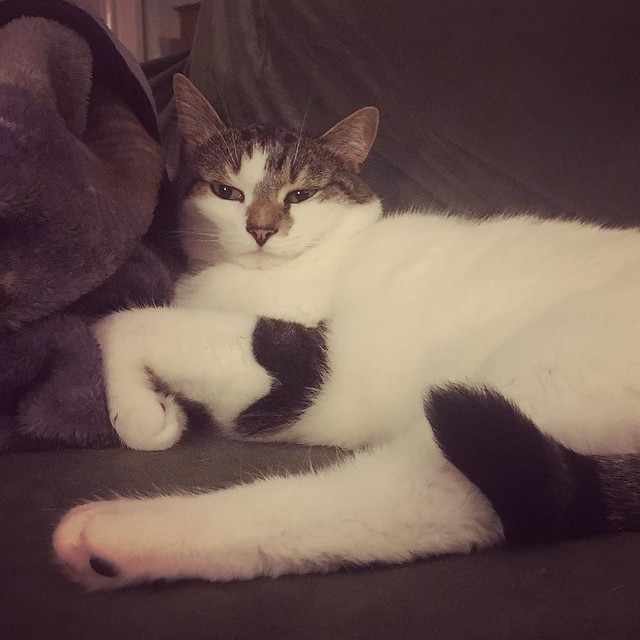 Most unflattering angle ever. #catsofinstagram