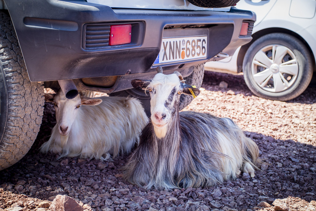 Goats under car - Crete, Greece