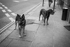 London Walk-6214.jpg