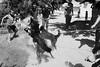 Village dogs fight by damonlynch