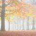 Highfields Autumn Fog