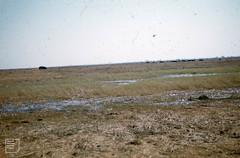 Herd of hippos on marsh. Kafue reserve. North Rhodesia