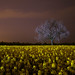 Light Painting in a yellow field by JanLeonardo - Light Painting Artist