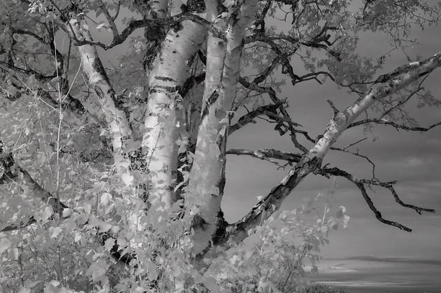 treewalk33