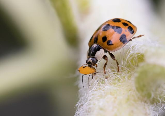 Ladybug Lunch