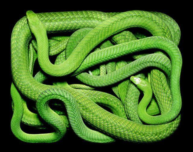 snake_art_18