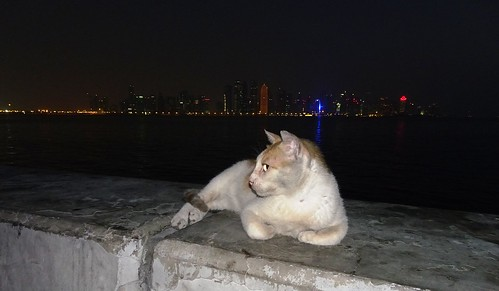 Cat in front of the skyline at Doha Corniche