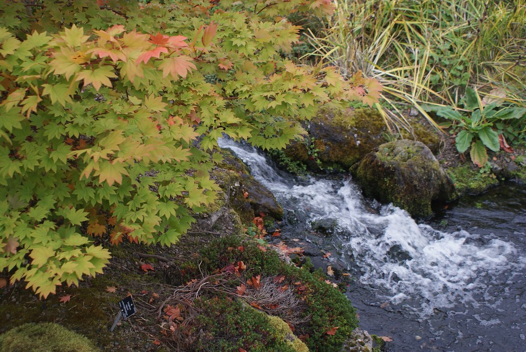 > Rivière et plantes de la forêt tempérée au jardin botanique d'Edinbourg