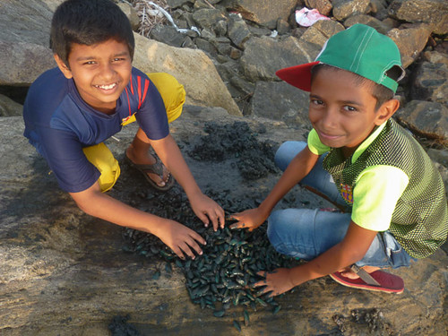 kids processing green mussels