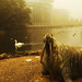 Walrus (Mowbray Park)