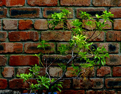 green dappled