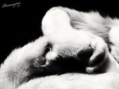 #climanyaro #foto #animal #cute #canine #nature #downy #portrait #wildlife #pet #little #cat #ilovemycat #catsagram #catstagram #kitten #hair