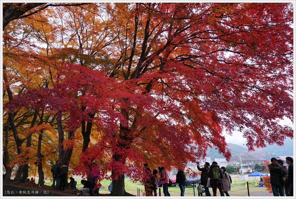 紅葉迴廊-紅葉祭-白天-27