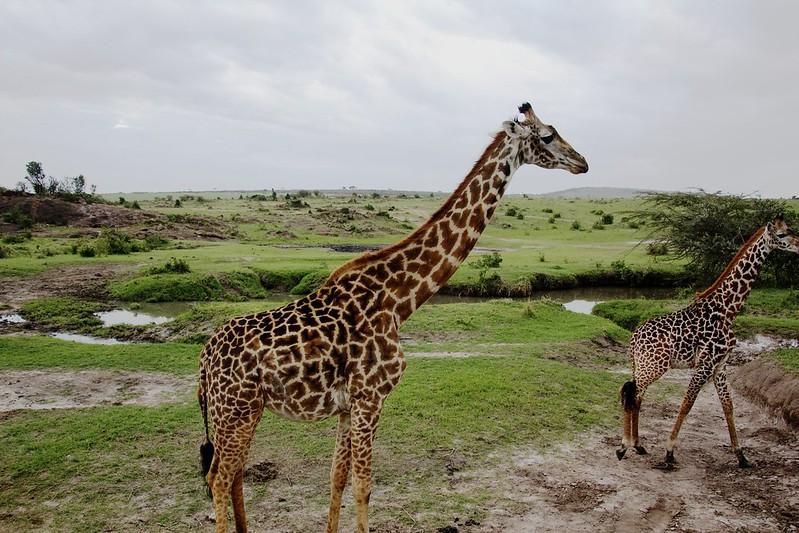 Maasai Mara 1 22