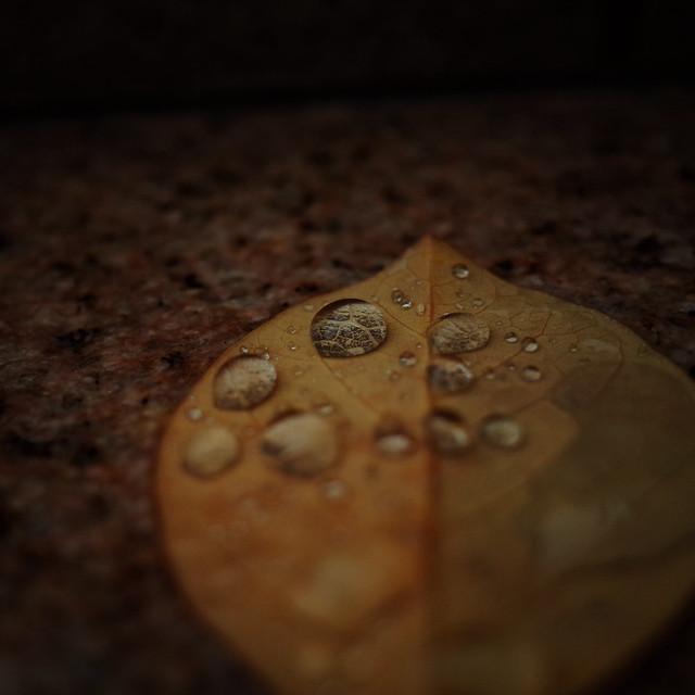 冷たい雨粒