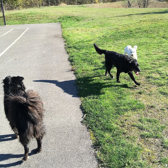 Bear Cub, Maggie and Mr. Bennett romping in the sun today. 🌞