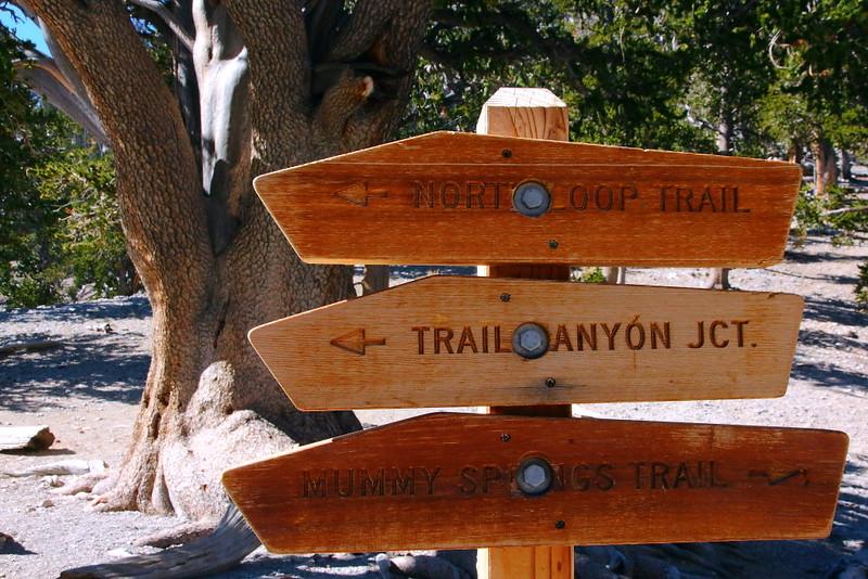 IMG_8180 North Loop Trail