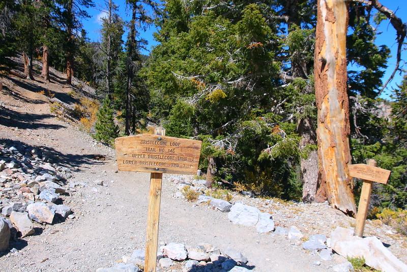 IMG_1230 Bristlecone Pine Trail