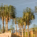 reflections of palm trees