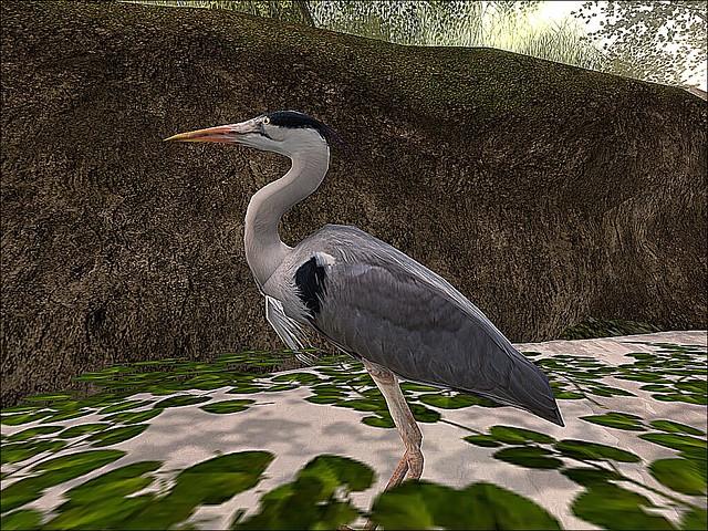 Libentia - Great Blue Heron At Rest