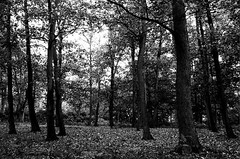 Where The Wild Things Are (B&W)