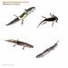 ambystoma larva grid MYN copy.pages