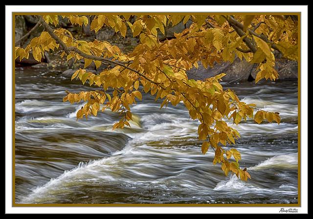 Oxtongue River Rapids Colour (explore)