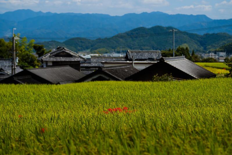 Original landscape of Japan (NARA)