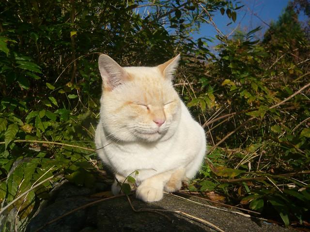 arashiyama0902022