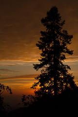 KingsCanyon-SequoiaNatParks-23